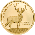 Red Deer – Cervus elaphus