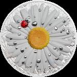 Daisy & Ladybug